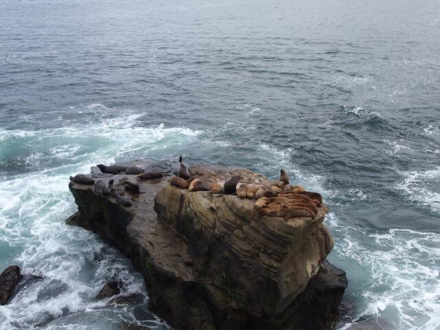 La Jolla Cove foche leoni marini